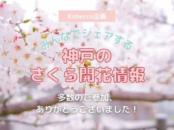 みんなでシェアする神戸のさくら開花情報